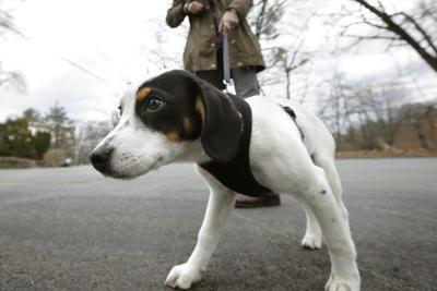Broken bones from falls on the rise among older dog walkers