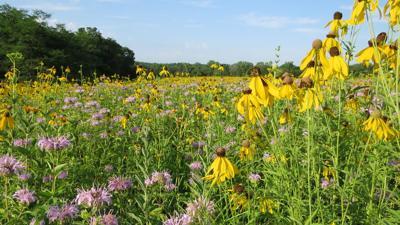 native prairie plants