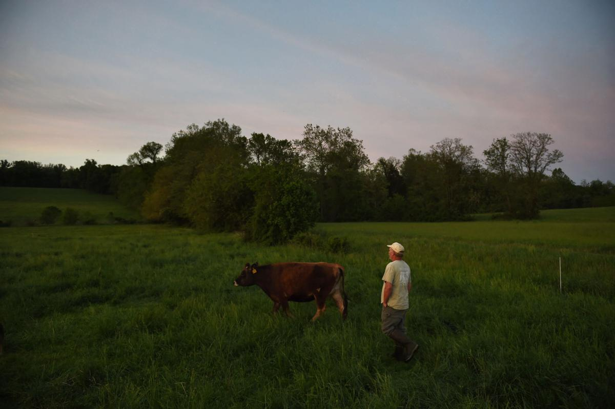 Why your milk may not be truly organic | Featured Stories