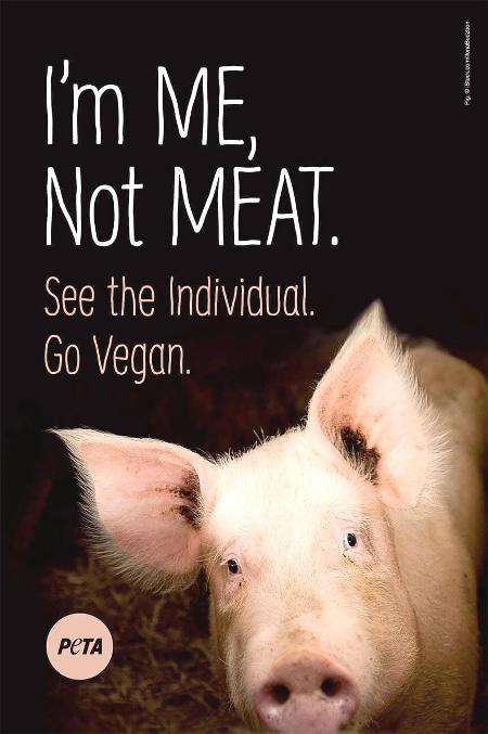 PETA to put billboard near site of hog accident | | cnhinews com