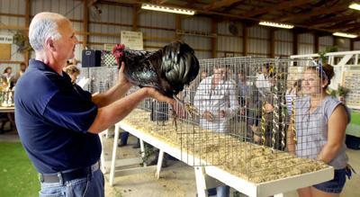 Bird flu scrubs shows at Indiana 4-H fairs | News | cnhinews com
