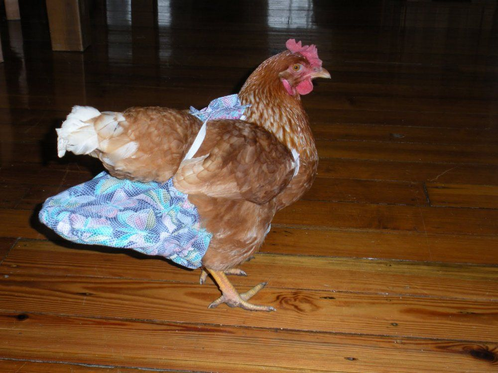 where to find chicken diapers  the best of craiglist