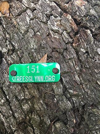 010119_trees01