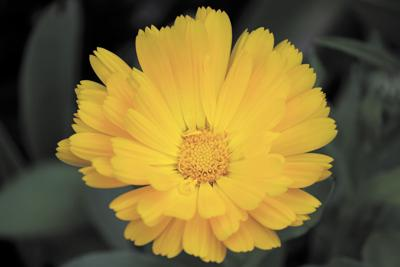 091219_flower