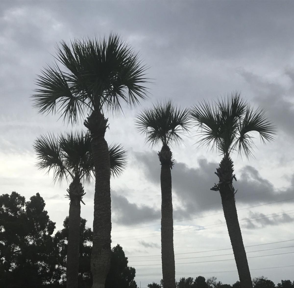 082917_palm02