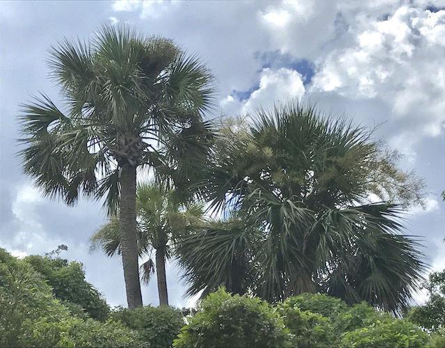 082917_palm01