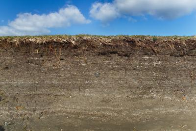 Tidal marsh soil profile in the cutbank of a creek, the result of accretion and erosion, layers of clay with small fragments of shells
