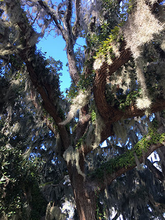 010118_trees02