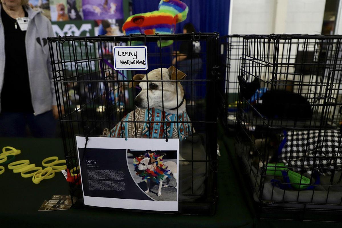 Pet expo - Photo 1