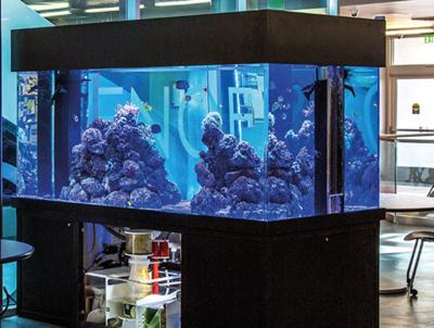 OCC Donated Aquarium