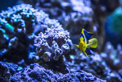 Aquarium file photo