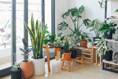 How to grow healthy houseplants this blooming season