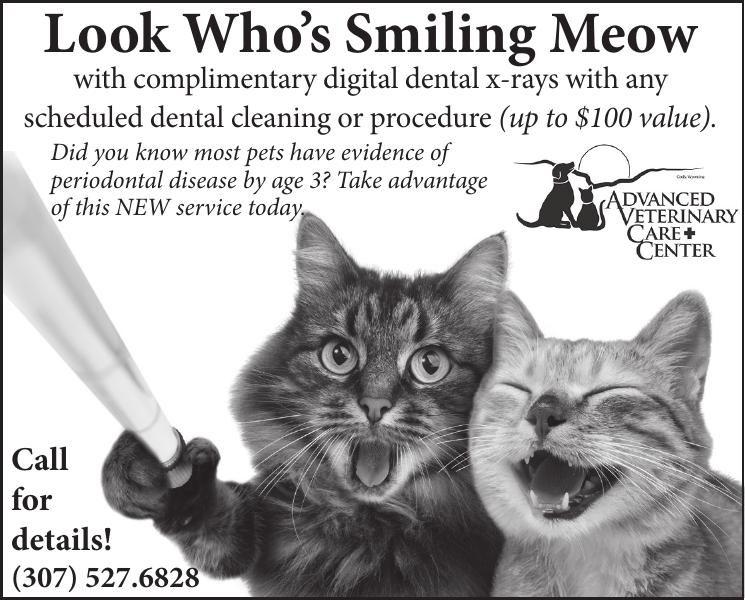 009344_advanced_vet_care_center_clinic_cat_xray_health
