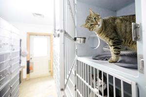 Animal shelter needs land for new building