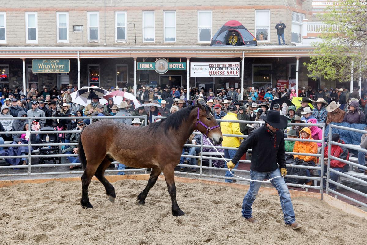 Top horses go for big bucks   Local News   codyenterprise com