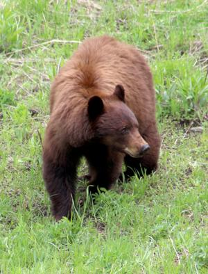 Column: Bears, badgers and more spotted on recent Park trip