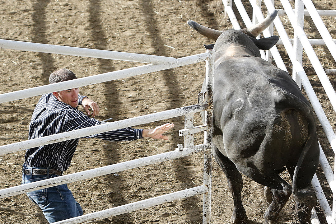 Photos Xtreme Bulls And Cody Stampede Opening Night