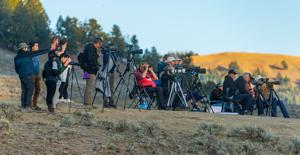 Sholly grapples with record visitation - Yellowstone roads jammed with tourists