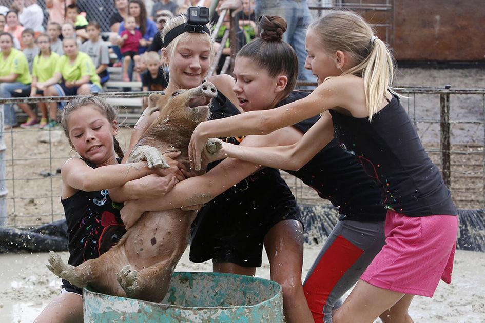 Photos Pig Mud Wrestling At Park County Fair   Codyenterprisecom-5731
