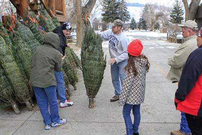 A good Christmas tree