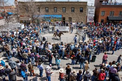 Draft gelding brings $36K: Cody Horse Sale a success, organizer says