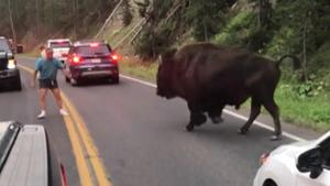 Suspect in Yellowstone bison incident pleaded not guilty