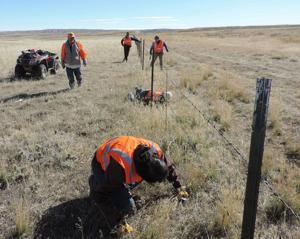 Fence improvement project benefits pronghorn migration