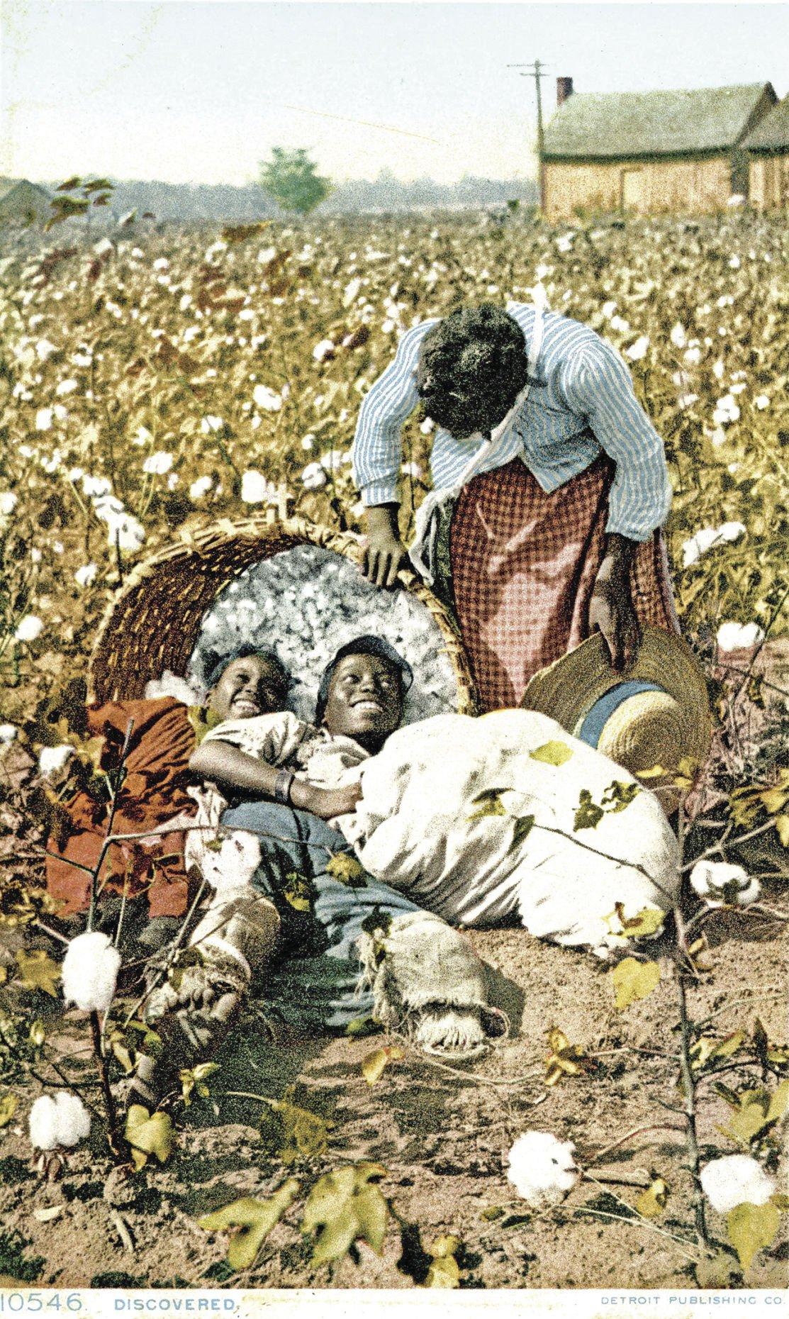 CottonProductionAnish003.jpg