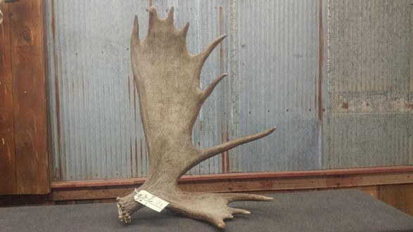 Three days of antlers, taxidermy, guns and sporting goods in