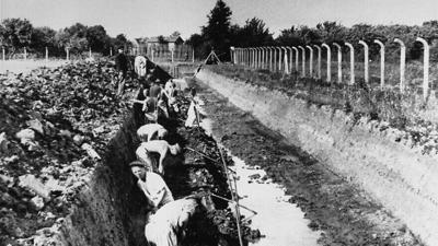 Prisoners in forced labor at Neuengamme concentration camp.