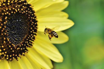 Stock bee honey