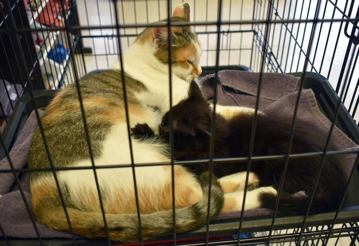 Momma cat and kitten