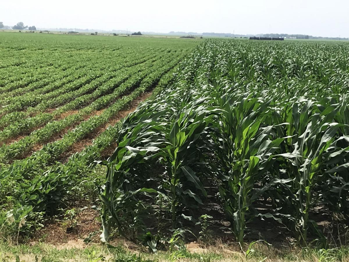 Butler County Crops