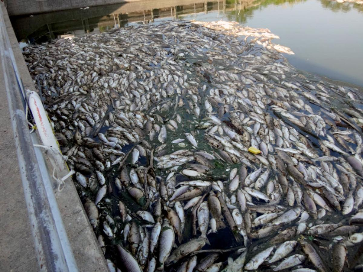 Official thousands of fish killed in canal local for Nebraska game fish and parks