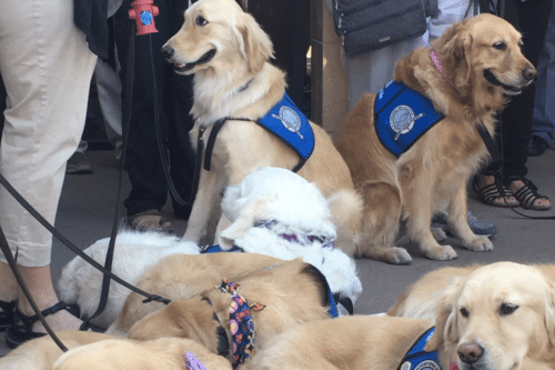 Comfort Dogs Arrive In Las Vegas For Emotional Support And Cuddles