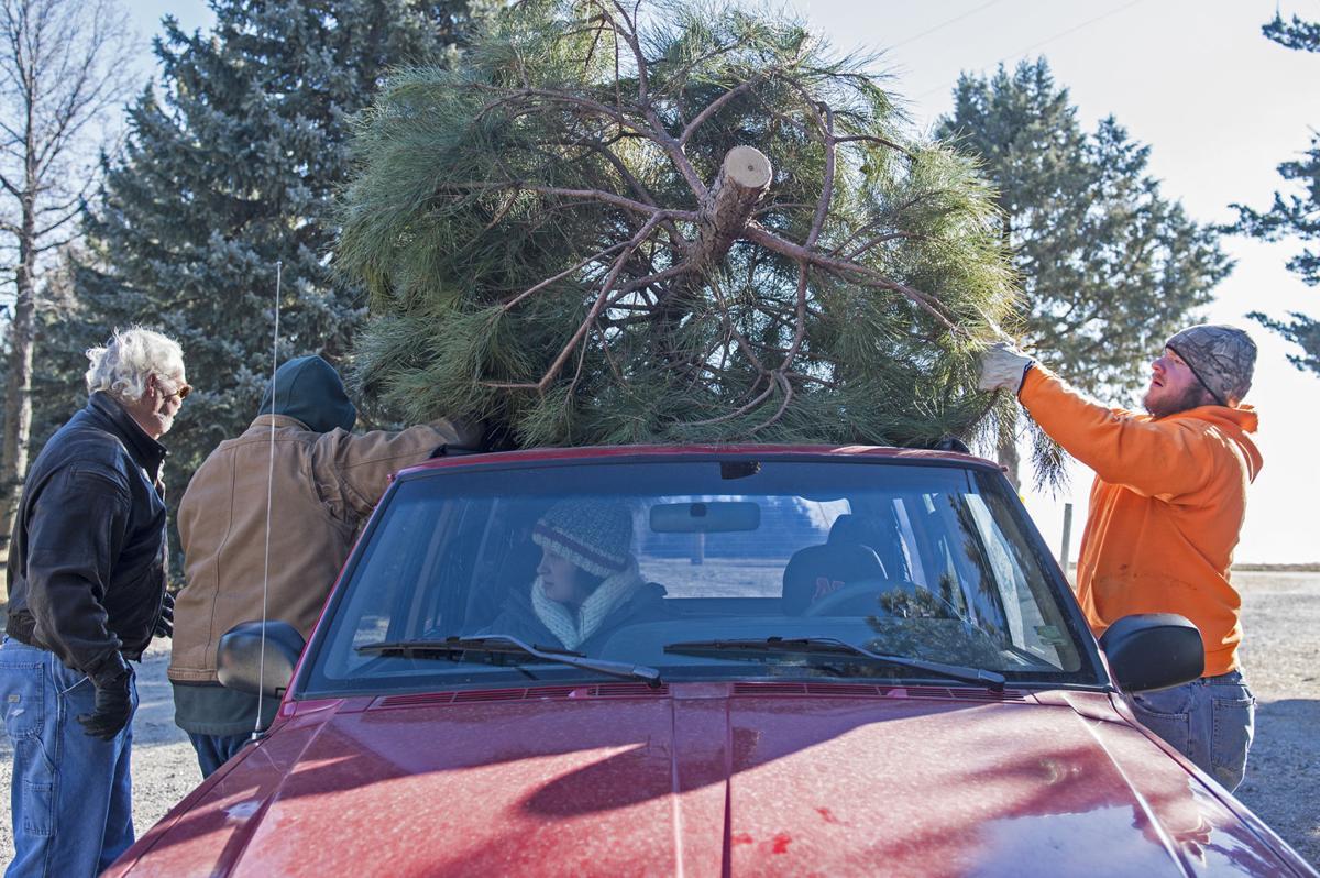 For Nebraska Christmas tree growers, drought's lingering impact ...