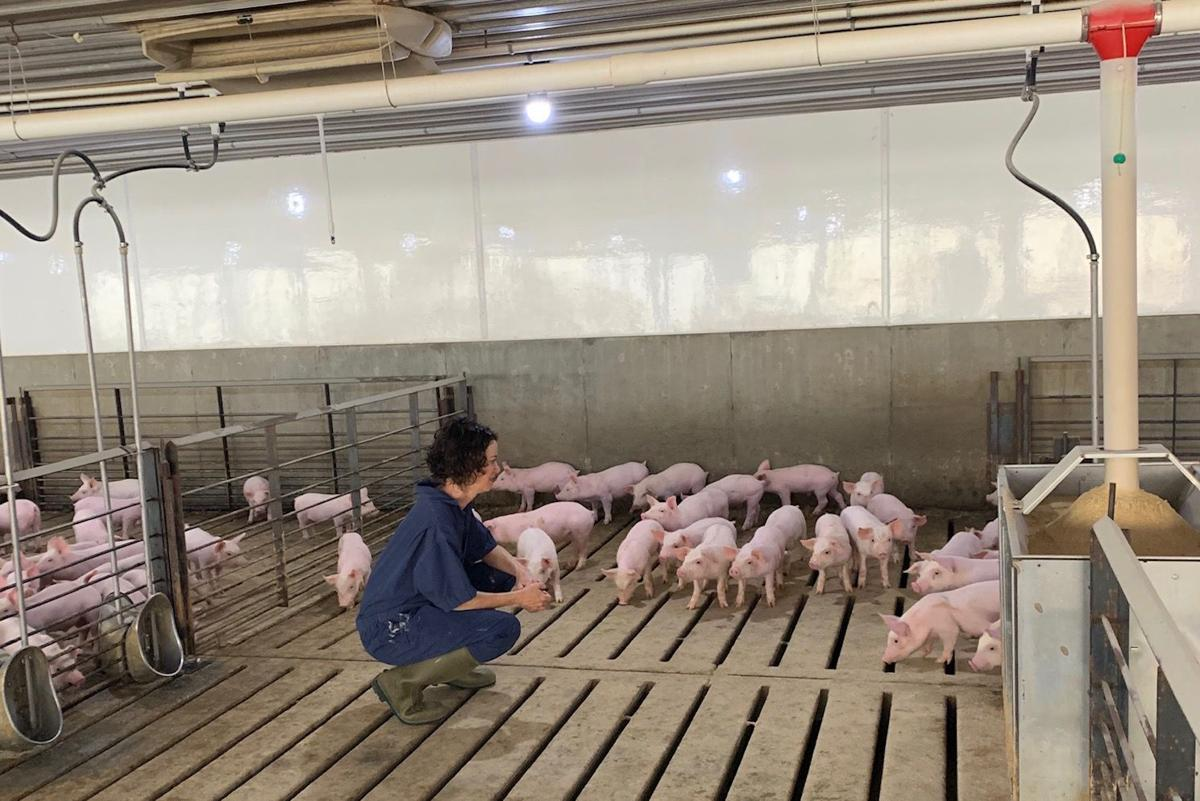 COVID livestock Shana Beattie pigs.jpg