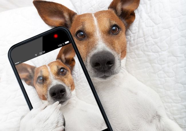5 Ways to Get Your Dog Noticed On Instagram