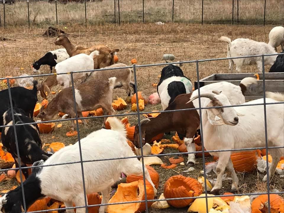 Pumpkin-recycling event