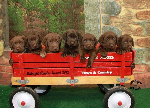Photos, puppies make a cute combo