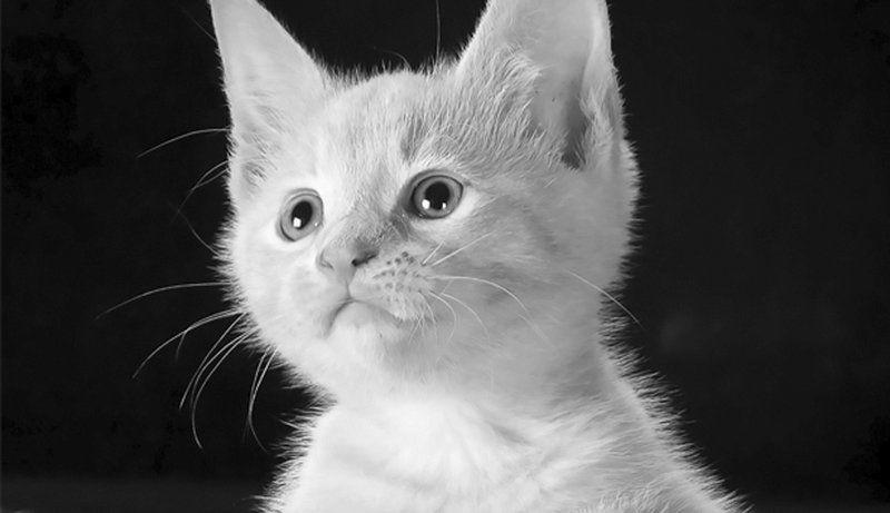 Ardisana: Help ensure new kitten's success