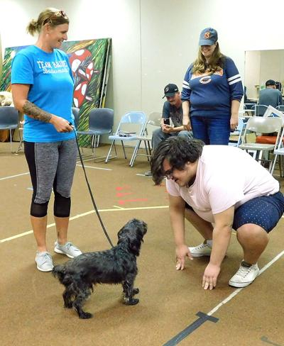 Toto  hopefuls put best paws forward