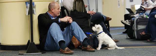 Dog in airport