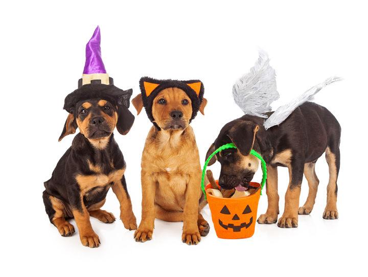 CNS Pet Costumes 1016 1