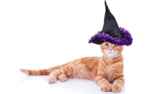 CNS Pet Costumes 1016 2