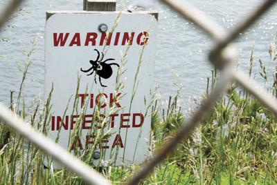 WH Lyme Disease