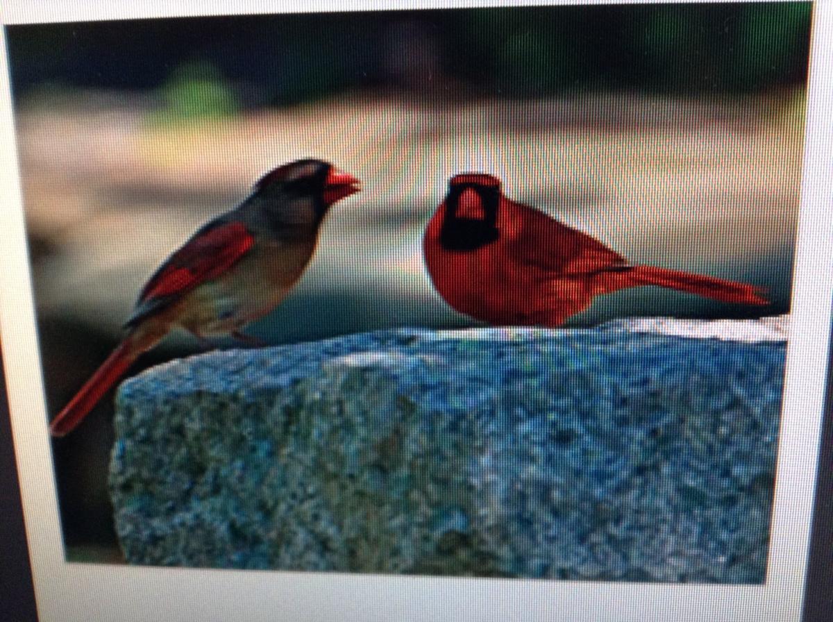 Birds on the gravestone