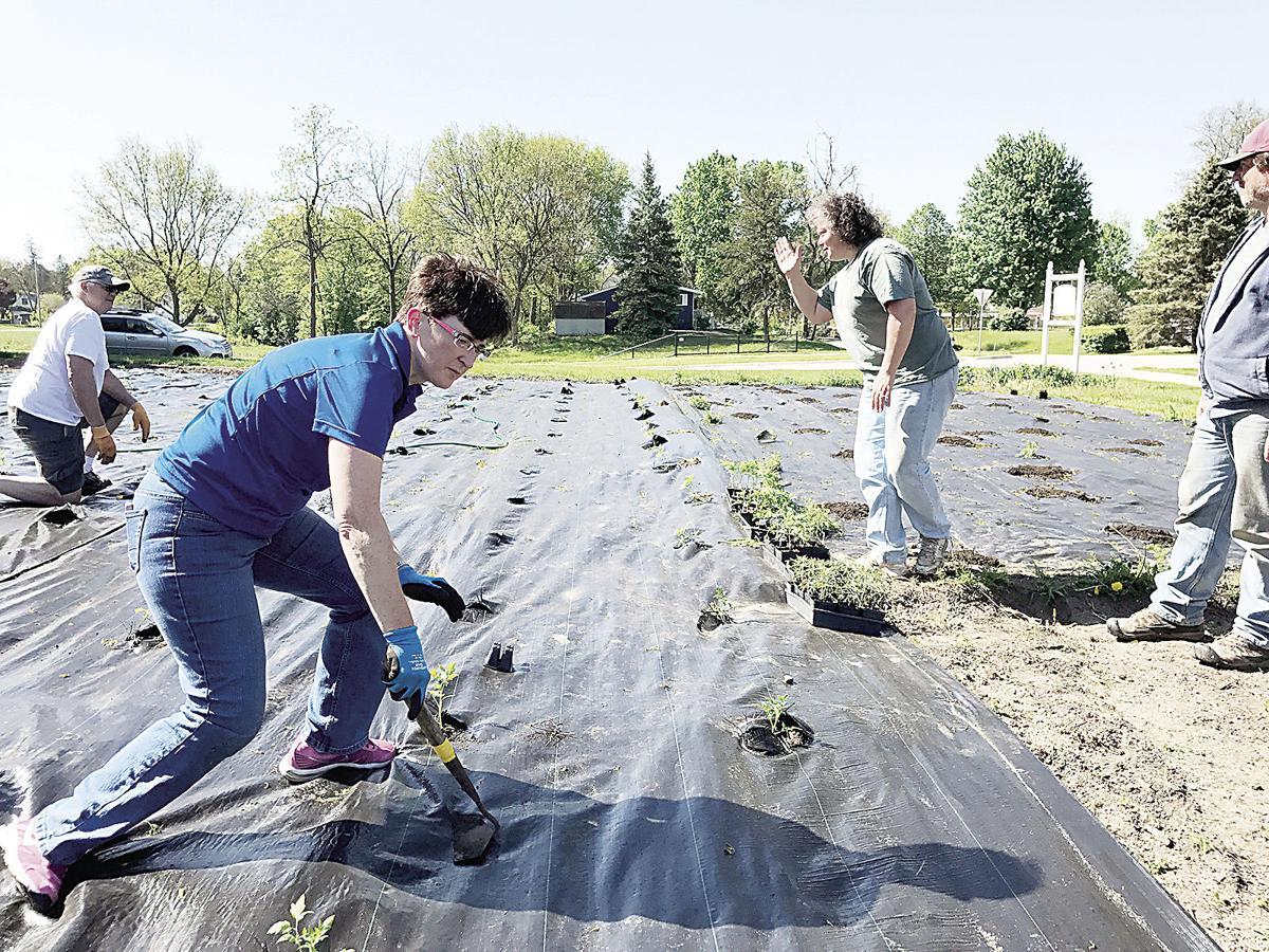 Rathe volunteers in garden