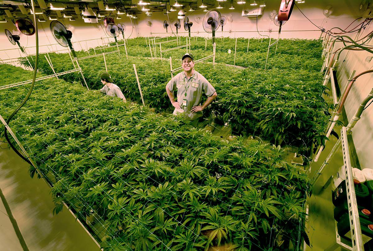 A Complex New Ecosystem Revolving Around Cannabis is Sprouting Up in CT