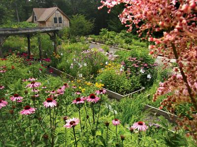 Native Plants Can Thrive in Your Home Garden